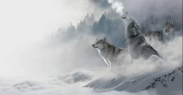 风景头像 好运狼
